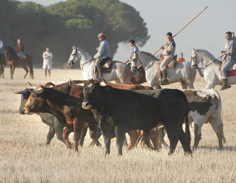 Traditional Bull Runs